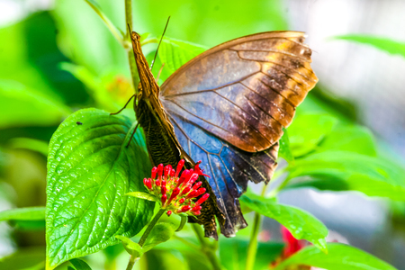 Beautiful butterflies Stock fotó