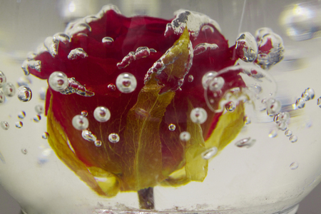 flower dipped into water