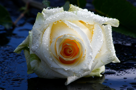 White and red roses, bouquet