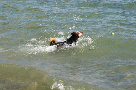 Dog playing in the sea