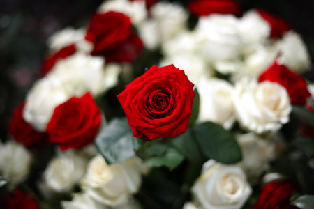 White and red roses, bouquet Stock Photo