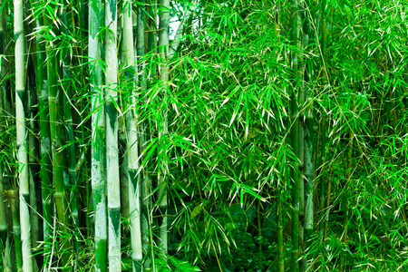 Heavenly Bamboo Trees