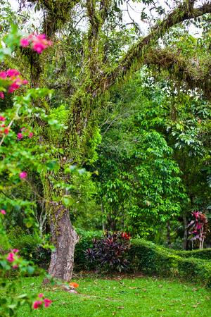 Park in Bali
