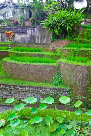 Beautiful Asian Garden