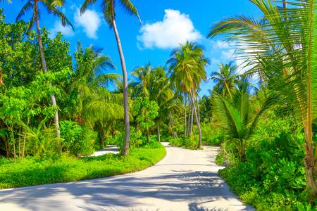 Dreamscape Escape On Maldives Stock fotó - 96766213