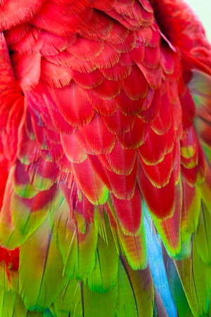 Nice parrot - Scarlet Macaw Stock Photo