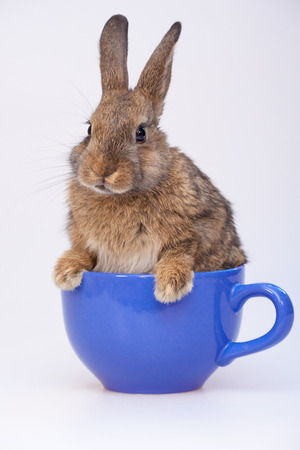 Cute little bunny Banco de Imagens - 98852823