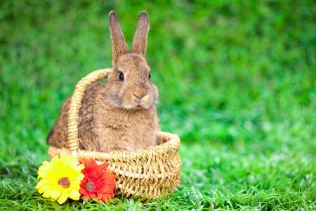 Easter little Bunny