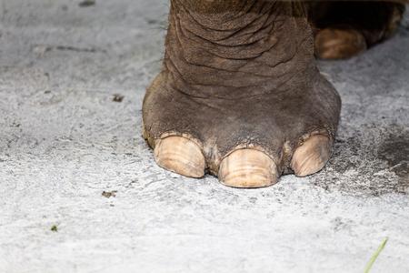 Big  Elephant Feet