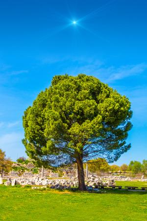 Beautiful giant tree under a shiny star Stock Photo