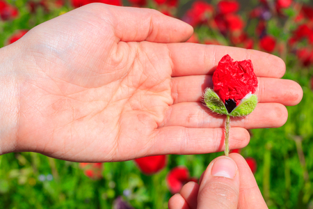 Poppy in the hand Stock Photo
