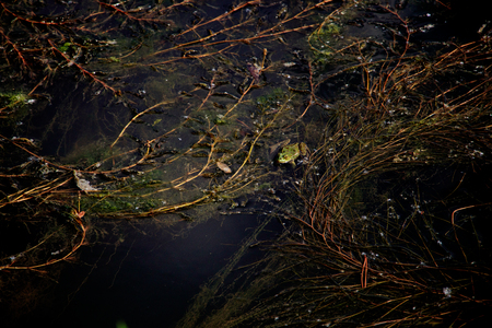The frog in the water Imagens