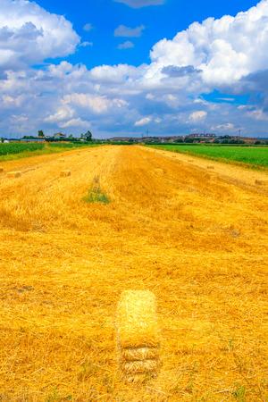 Wheat field and cumulus clouds Фото со стока - 101502777