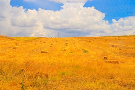Wheat field and cloud sky
