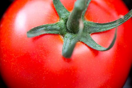 Red Tomatoes - Solanum Lycopersicum