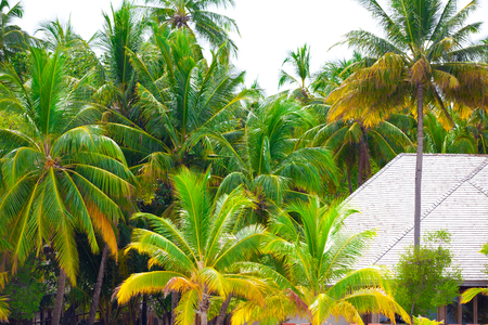 Holiday in maldives 写真素材