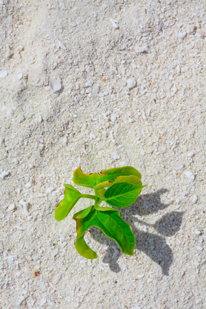 Green plant on the sand