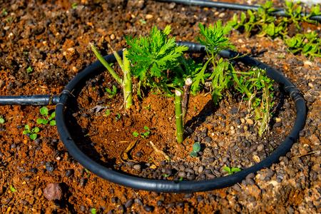 Rudimentary Irrigation System