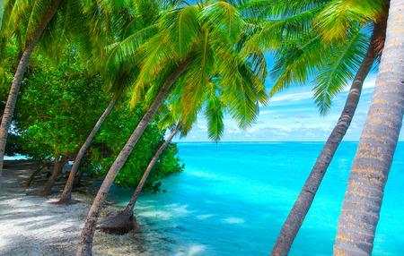 Palmen am Sandstrand und türkisfarbenem Meer von oben Standard-Bild