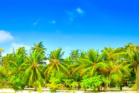 Droomstrand met palmbomen op wit zand Stockfoto