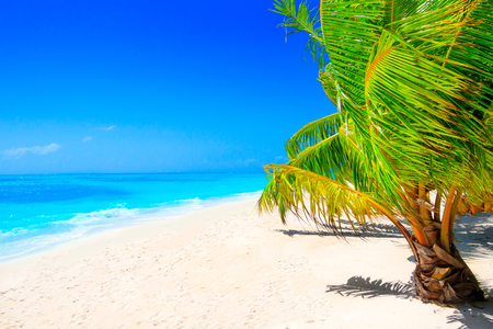Dream beach with palm tree on white sand and turquoise ocean