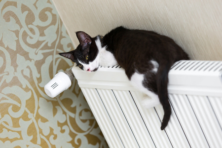 Cat on the heater
