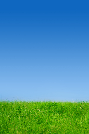 Green grass on blue clear sky, spring nature theme