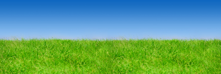 Green grass on blue clear sky, spring nature theme, Panorama 版權商用圖片 - 117218635