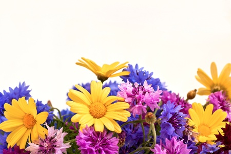 garden cornflowers: wild flowers with the place for text Stock Photo