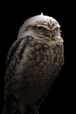 An owl  photo