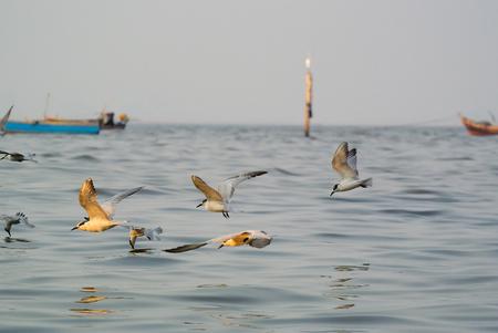 the ornithology: flock of gulls at the seaside.