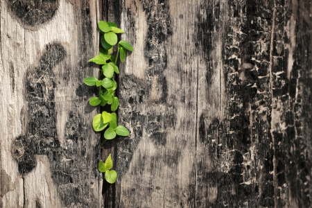 young plant on Timber Stock Photo