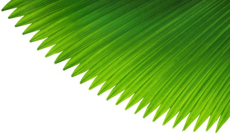 Green palm leaf on white background Stock Photo