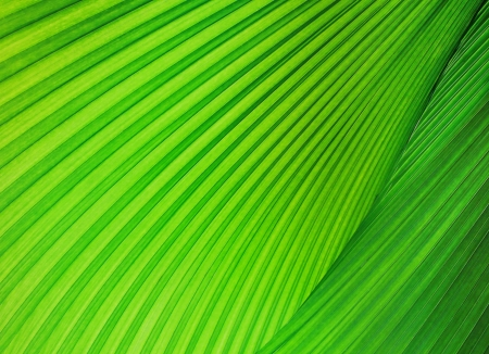 pattern Green palm leaf