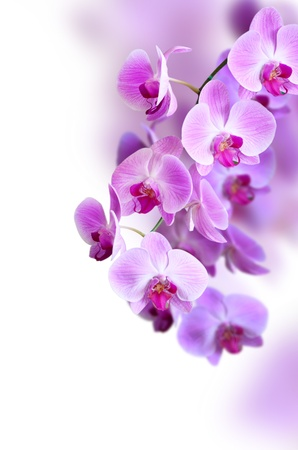 purple orchid flower