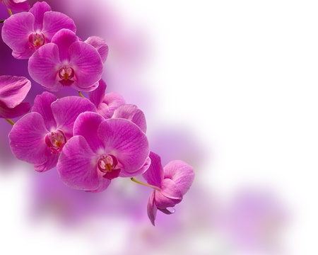 beautiful purple orchid flower Stock Photo