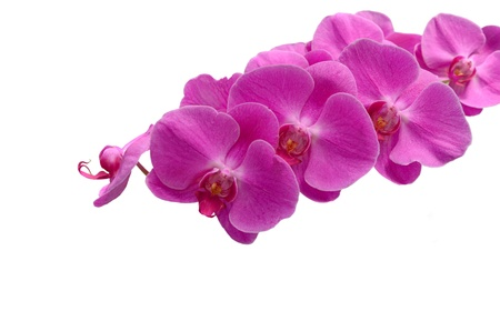beautiful pink orchid flower Stock Photo - 20336880