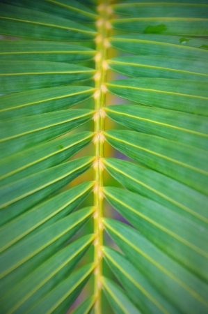 Palm Leaf pattern Stock Photo