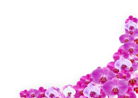 orchid petals background  Stock Photo