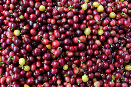 unroasted: Raw coffee beans background
