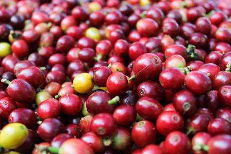 Raw coffee beans background