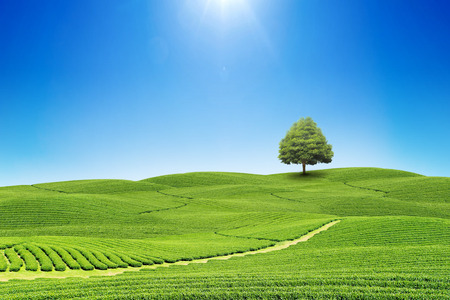 Green field and blue sky. tree and natural