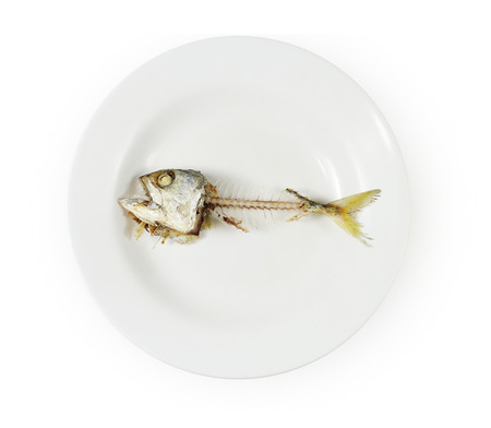 overpopulation: Fish skeleton on plate ,Concept of food shortage, poor