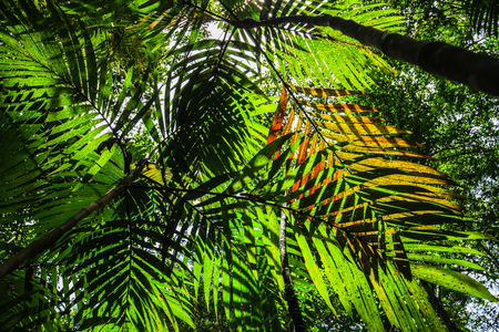 Shadow of palm leaves in the rain forest.
