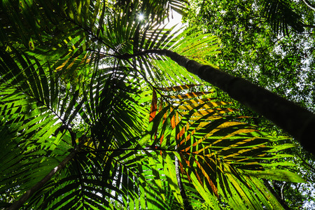 rain forest: Shadow of palm leaves in the rain forest.
