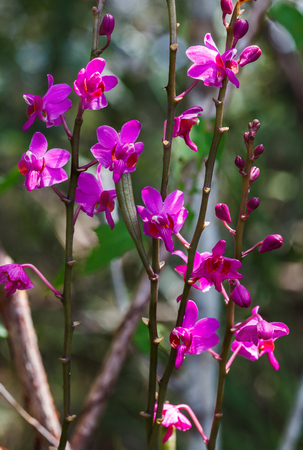 The beautiful  orchid  in tropical forests.