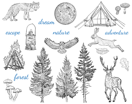 Forest adventure collection: glamping tent, bonfire, camping lamp, full moon, spruce, fir tree, mushrooms, fox, hare, deer. Hand drawn vintage engraving style vector illustration with inscriptions.