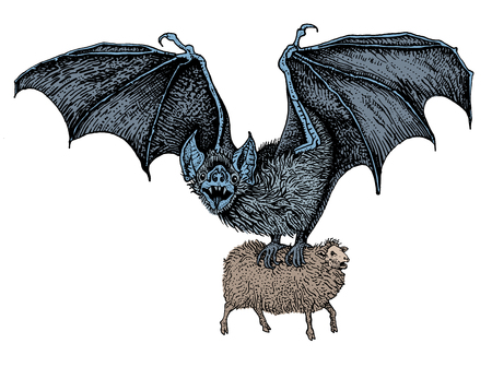 Flying spooky giant vampire bat caught a sheep. Hand drawn vintage engraving style vector illustration. Design for sticker, poster, t shirt print, tattoo. Illustration