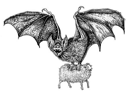 Fliegende riesige Vampirfledermaus fing ein Schaf. Handgezeichnete Vintage Gravur Stil Vektor-Illustration schwarz auf weißem Hintergrund. Aufkleber, Poster, T-Shirt-Druck, Tattoo-Design, Malvorlagen für Erwachsene.