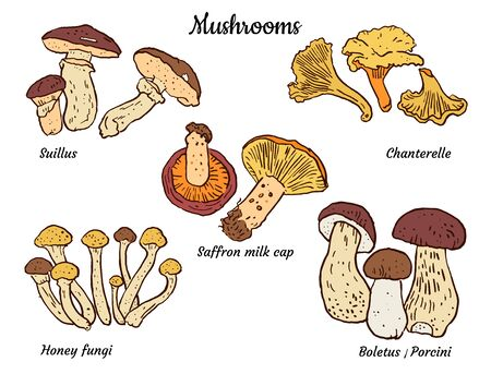 Edible mushrooms : boletus, porcini, chanterelles, saffron milk cup, honey fungi, suillus. Hand drawn illustration. Seasonal food, packaging design, restaurant menu, stickers, coloring page. Illusztráció
